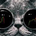 Cat trader